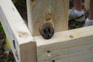 woodplug